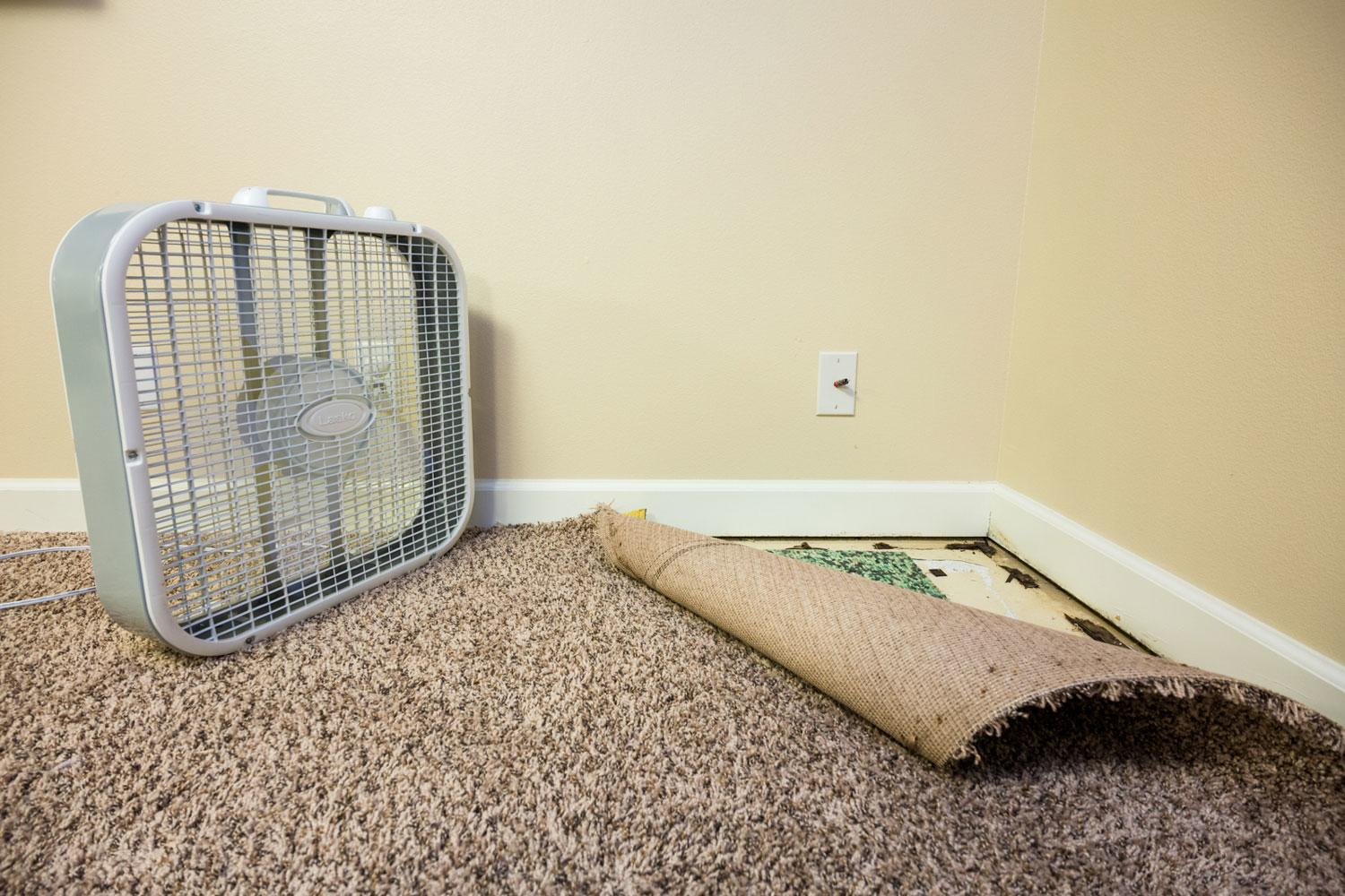 A wet finished basement with carpet pulled away from wall and a fan to dry the area