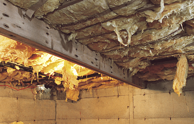 How to Repair Wood Damaged by Rot, Mold, Termites, and Pests