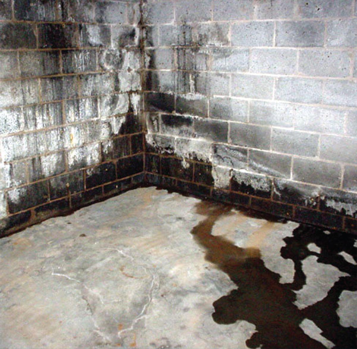 Wet dirty basement