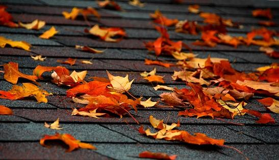 How To Safely Remove Leaves From Your Roof