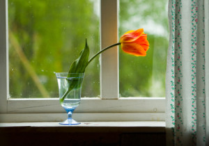 Your Options In Professionally Installed Replacement Windows