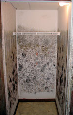 Moldy Drywall in a Edmonton Rental