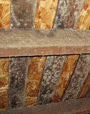 Wood Sub Floor in Edmonton with Mold
