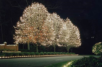Holiday tree lights