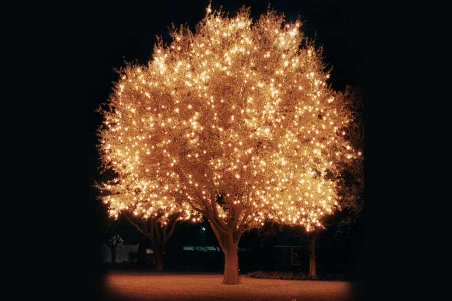 Holiday tree lights