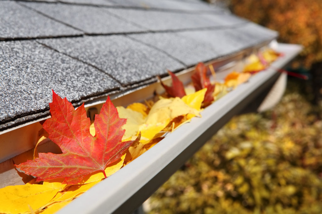 5 Safety Tips for Cleaning Your Gutters