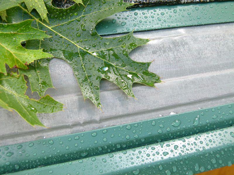 Gutters Vs. Leaves