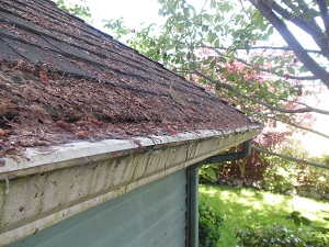 Web debris covering roof and gutter
