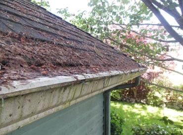 Gutters clogged by wet debris