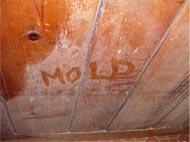 Moldy Wall in MA