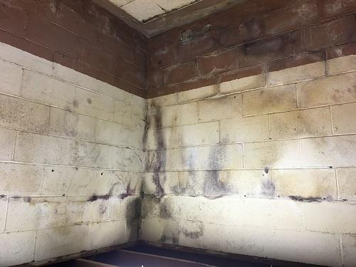 black mold on basement wall