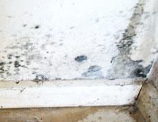 Moldy Wall in TN