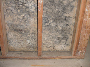 Mold or mildew