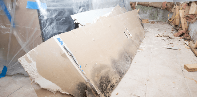 Basement Mold: Health Risks and Mold Prevention Tips
