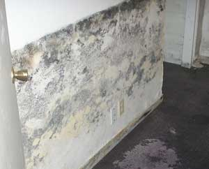 Basement Mold Allergens