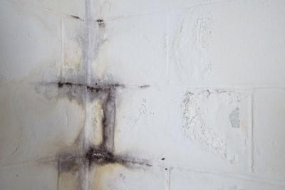 Black mold stains on a painted basement wall
