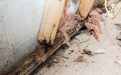 Rotted wood basement wall stud