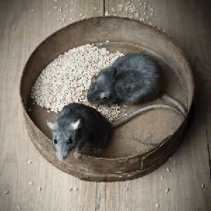 [rats and mice]