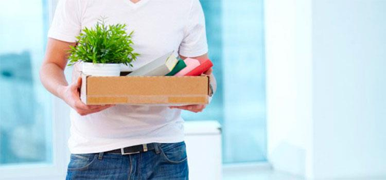 How to Safely Move Houseplants on Moving Day