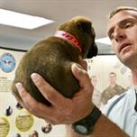 Veterinarian Checking Out A Puppy