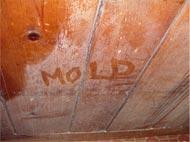 Moldy Wall in Ohio