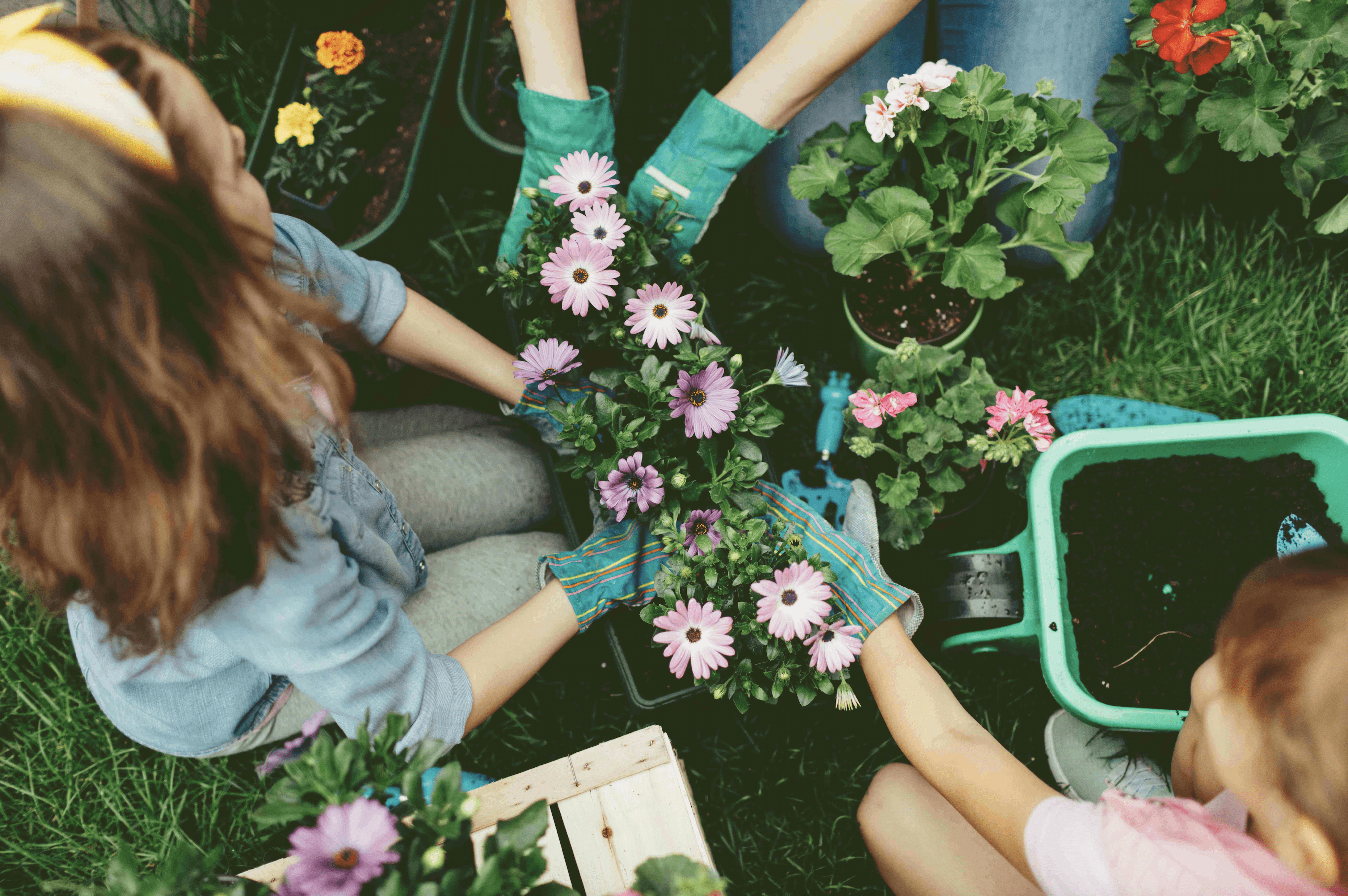 7 Gardening Tips and Tricks for Beginners