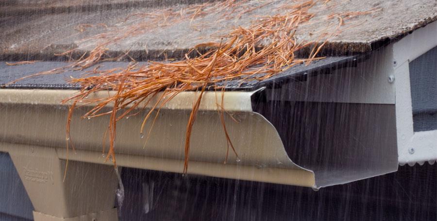 Pine Needles Kept blocked with Raindrop Gutter Guard
