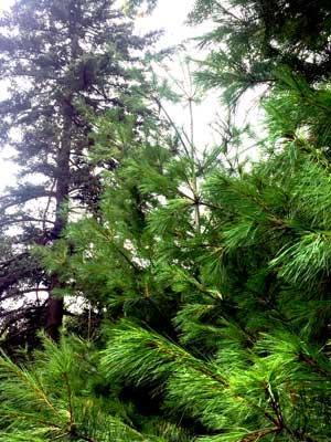 Best Gutter Guards For Pine Needles - Image 2