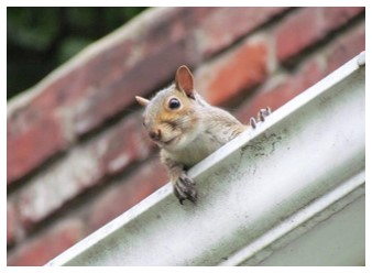 Pests in Gutters