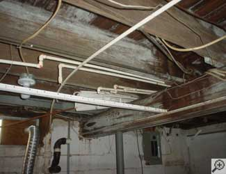 a humid basement overgrown with mould and rot in Granton