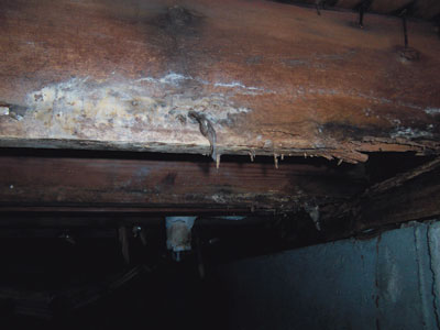 Moldy Rotted Wood