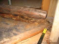 Rotten wood in a basement
