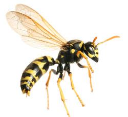 Wasp control in Stratford