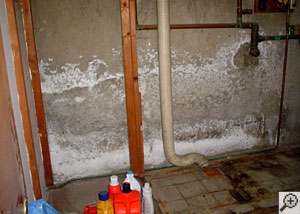 A basement wall covered in a white, flaky mineral salt known as efflorescence.
