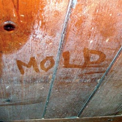 Wood showing signs of cosmetically damaging mold