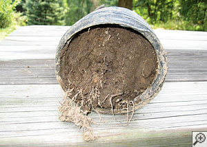 A severely clogged basement drain system filled with mud and roots.