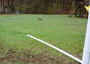 A PVC sump pump discharge line pipe laying in a yard, unburied.