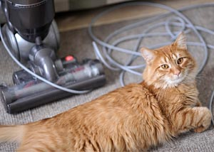 A cat laying down next to a HEPA vacuum cleaner
