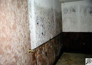 Mold growing on a door and on drywall in a humid basement.