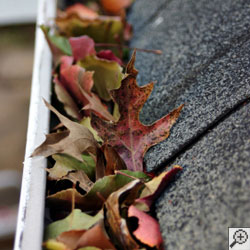 A closeup of a gutter clogged with fall leaves.