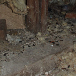 mice droppings in a crawl space