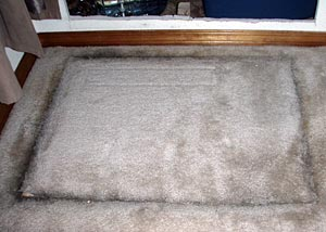 Moldy carpet from crawl space air and humidity
