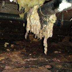 rotting fiberglass insulation in a crawl space