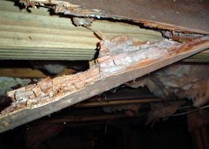 Rotting wood in a basement.