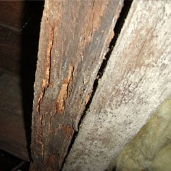 Rotting floor joists in a crawl space