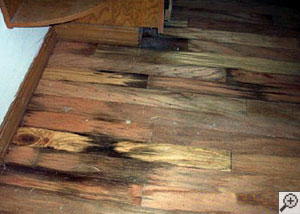 Basement water has flooded over this wood floor, leaving rot, mold, discoloration, and buckling in the wood materials.