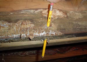 A crawl space floor joist that's been rotted through so badly that we stuck a pencil through it with no damage to the pencil at all.