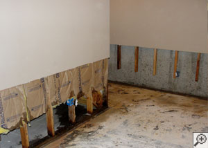 Drywall, fiberglass, and studs removed to allow for a basement drain system.