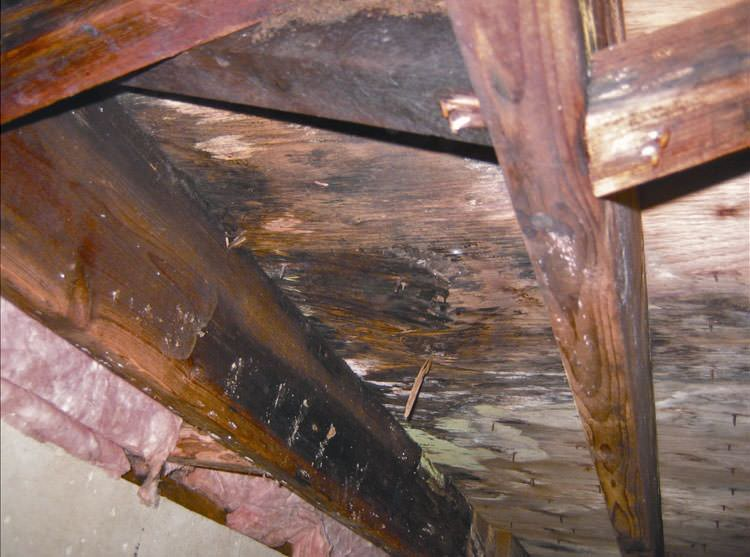 Crawl space support beams with wood rot damage in Eugene, OR