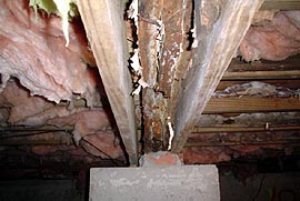 Rotten floor joist due to mold and dampness